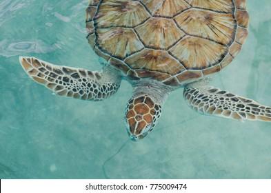 Sea Turtle in Cancun, Mexico, Turtle Preserve, 2016