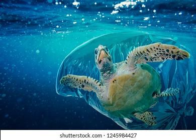 Sea turtle (Caretta caretta) trapped in a plastic bag. Pollution in oceans concept.