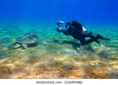 Sea turtle (chelonia mydas) and scuba diver photographer. Swimming scuba diver and posing turtle. Scuba diving with wild animal in the ocean.