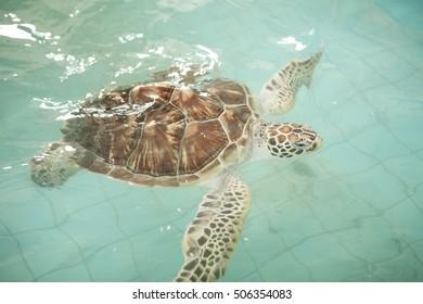 Sea turtle Conservation of marine species