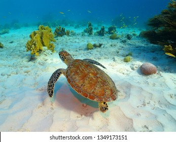 Sea turtle, coral reef and white sandy seabed. Tropical seascape with swimming turtle. Underwater picture from snorkeling with the sea turtles. Marine animal, tortoise and corals.