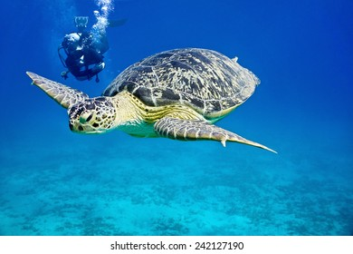 Sea turtle and diver on the blue background