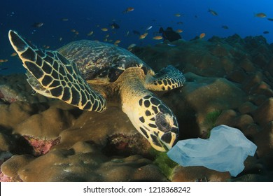 Sea Turtle eats plastic bag