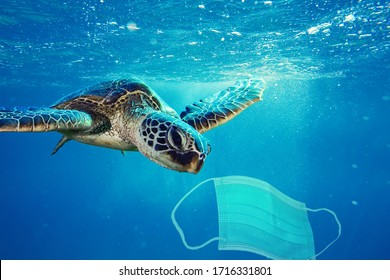 A sea turtle going to eat a surgical mask. Photo manipulation about ocean pollution and the consequences of overuse of surgical masks during coronavirus pandemic.