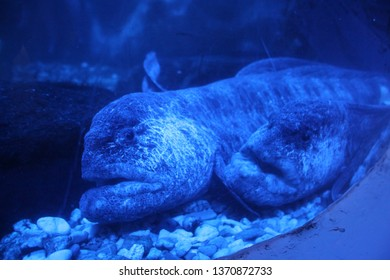 Sea Turtle, sea horse and sea wolf in blue water