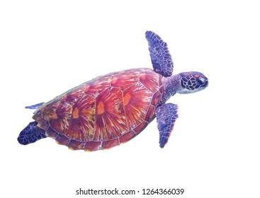 Sea turtle isolated on white background. Green turtle of tropical seashore full body photo. Marine animal clipart. Sea tortoise isolate for photo collage. Oceanic nature. Wildlife of tropic seashore