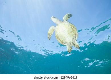 Sea Turtle lit up from Below