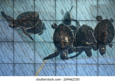 """sea turtle"" Mural. The tile painting concept"