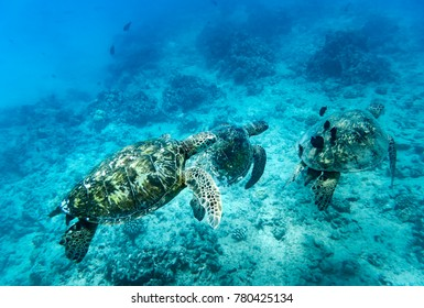 Sea Turtle, Oahu Hawaii