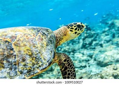 Sea turtle in an ocean