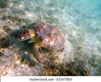 Sea Turtle on Sea Grass 2