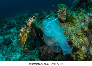 Sea Turtle and Plastic Bag Similan Islands Thailand