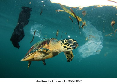 Sea Turtle in polluted ocean with plastic trash