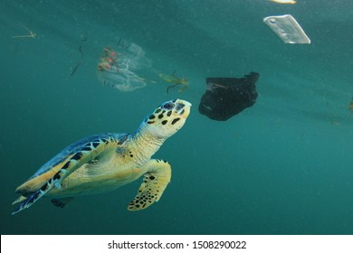 Sea Turtle in polluted sea, with plastic bags and other trash underwater
