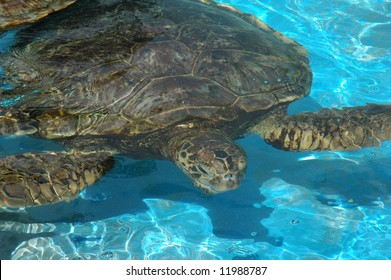 Sea turtle in public municipal zoo aquarium