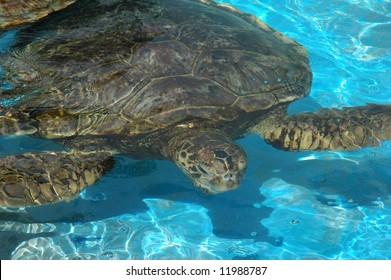 Sea turtle in public municipal zoo aquarium