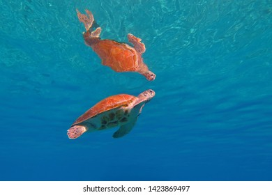 Sea turtle and reflection in the shallow sea. Blue ocean and swimming turtle. Underwater photography, marine animal. Seascape with aquatic life.