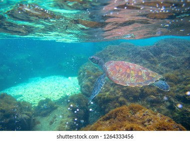 Sea turtle in shallow sea. Exotic marine turtle underwater photo. Oceanic animal in wild nature. Summer vacation activity. Snorkeling or diving banner template. Tropical seashore with sea tortoise