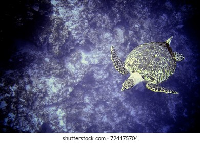 Sea Turtle swimming in the deep ocean. Underwater photography and scuba diving background.