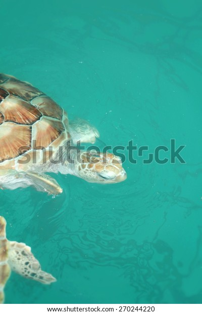 Sea Turtle Swimming Pool Stock Image | Download Now