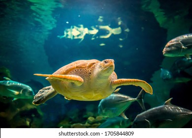 The sea turtle swims in the sea or the ocean, the concept of protection against the extinction of sea turtles, underwater life, pollution of the environment. Diving and freediving at sea resorts