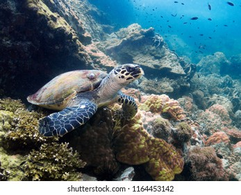 Sea Turtle in Thailand ocean