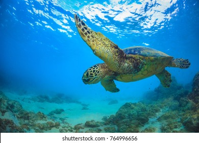 Sea turtle underwater against blue water surface on background