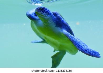 a sea turtle in underwater of the blue ocean