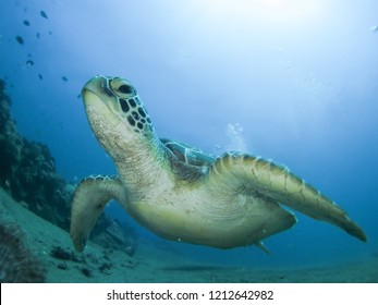 sea turtle with wide lens