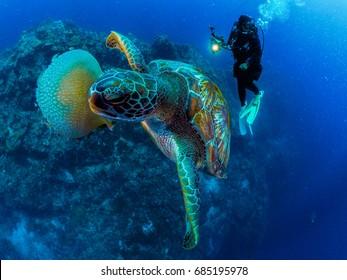 Sea turtle,Food,Life.