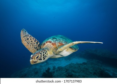 Sea turtles, fish and coral underwater