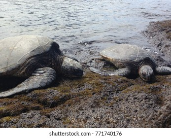Sea Turtles Hawaii