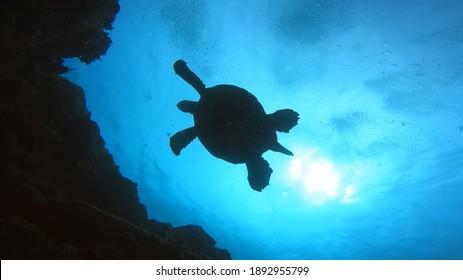 Sea turtles in Kauai, Hawaii