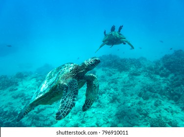 Sea Turtles, Oahu Hawaii
