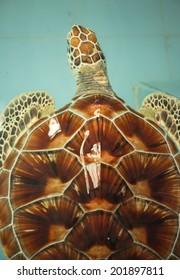Sea turtles in pool
