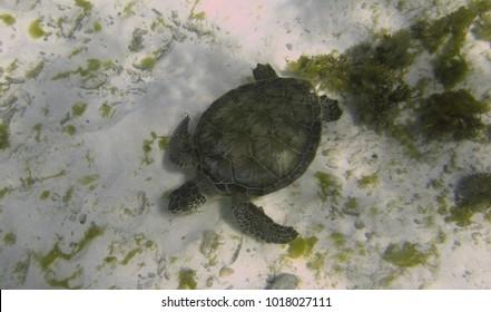 Sea Turtles Under Water