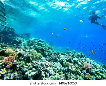 Sea underwater and coral reef.
