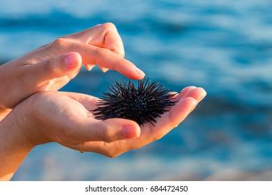 Sea urchin in beautiful woman's hand