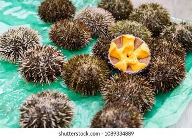 Sea urchin (fresh uni) Japanese fresh raw food in the shell at fish market