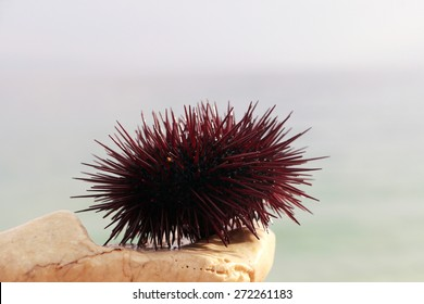 The sea urchin is on the stone