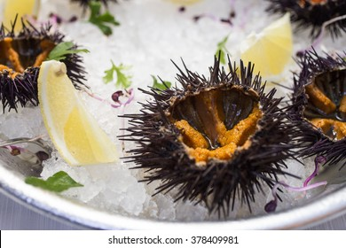 Sea urchin served in an ice bed