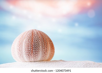 sea urchin starfish  with tropical ocean underwater seascape