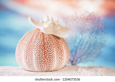 sea urchin with starfish  with tropical ocean underwater seascape