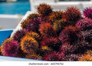 Sea urchins, fish market..