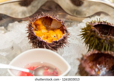 Sea urchins on ice