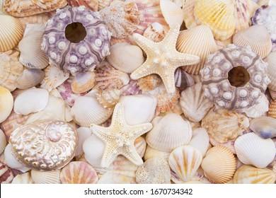 Sea urchins, starfish and seashells as background