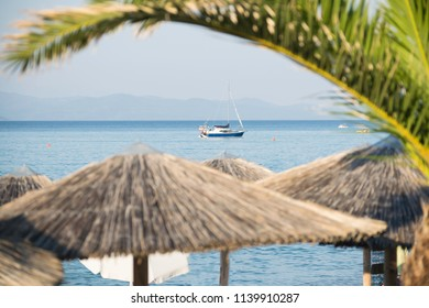 sea view with boat and palm