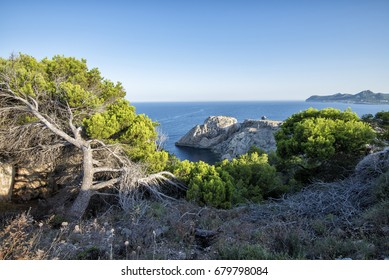 Sea view from a cliff with plants in the foreground