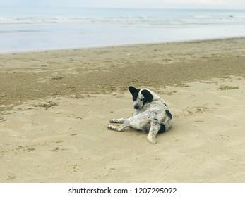Sea View Dog