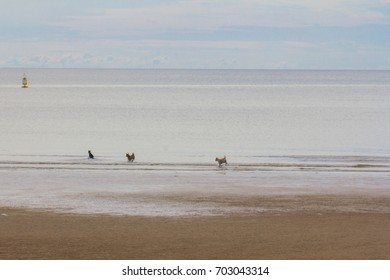 Sea view with dog playing sea water